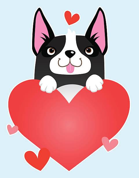 Love Boston Terriers vector art illustration