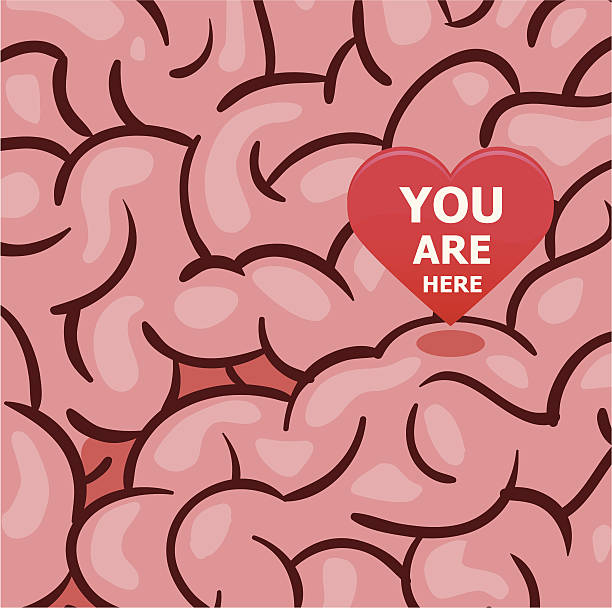 Love is in my mind Your Love is in my mind. Editable Vector File. corpus callosum stock illustrations