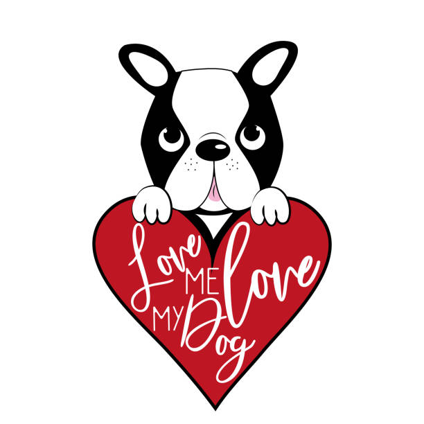 Download Boston Terriers Drawing Illustrations, Royalty-Free Vector ...
