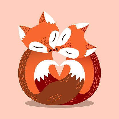Lovely couple foxes