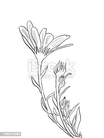Beautiful wild flower in line art illustration