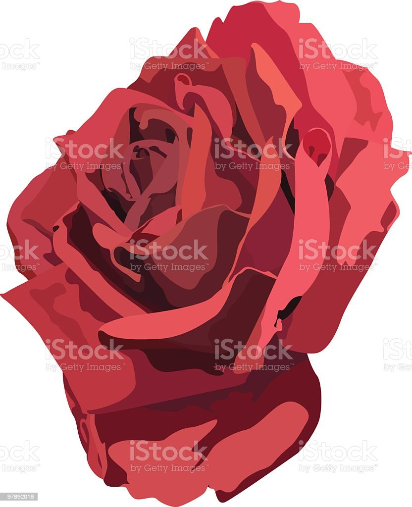 Lovely Red Rose royalty-free lovely red rose stock vector art & more images of beauty in nature