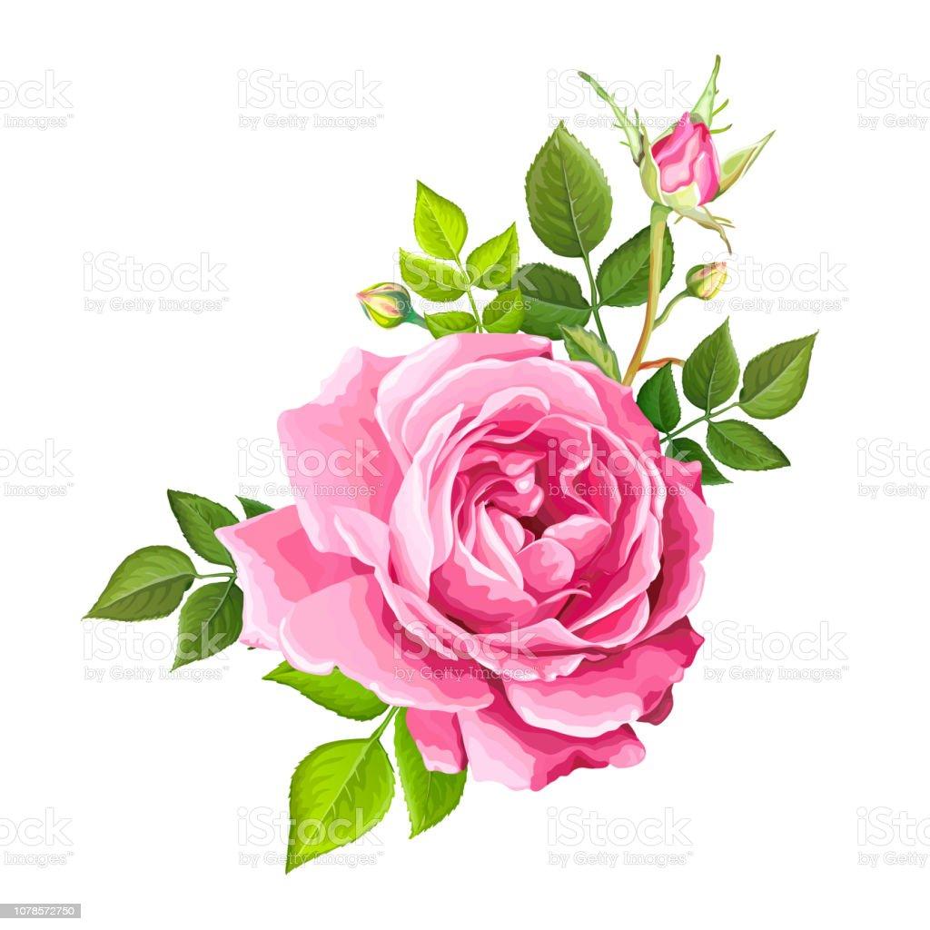 Lovely Rose Flower Stock Vector Art More Images Of Anniversary