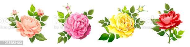 Lovely rose flower vector id1078583430?b=1&k=6&m=1078583430&s=612x612&h=knb4q1sqwmjoirq17voiwhmhrutre1p6hztom8wodbi=