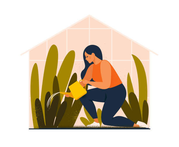 Lovely young woman or gardener taking care of home garden, watering houseplants growing in greenhouse.  Flat cartoon vector illustration. Lovely young woman or gardener taking care of home garden, watering houseplants growing in greenhouse.  Flat cartoon vector illustration. gardening stock illustrations
