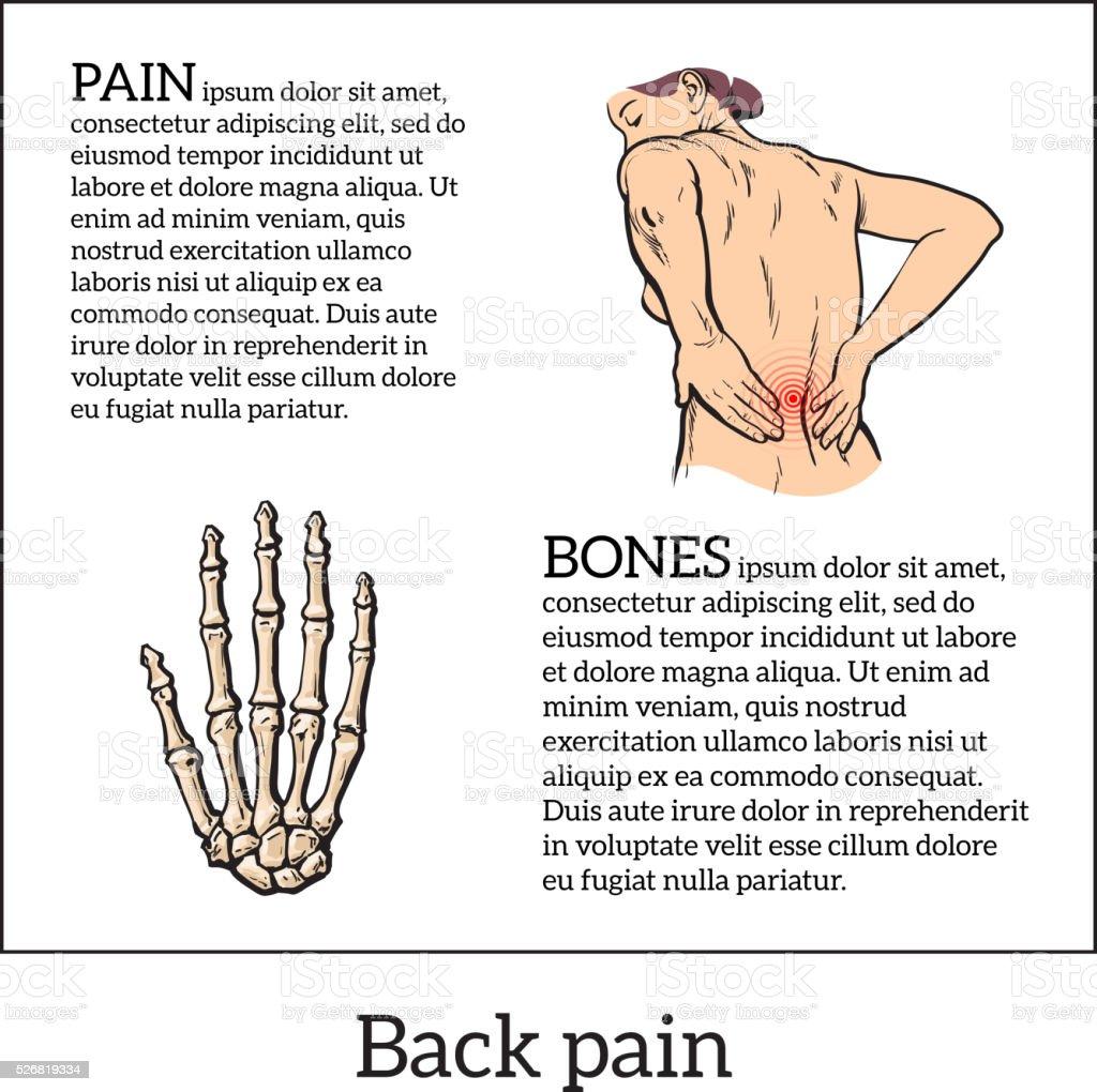 Wunderbar Menschliche Körper Im Unteren Rücken Bilder - Anatomie ...