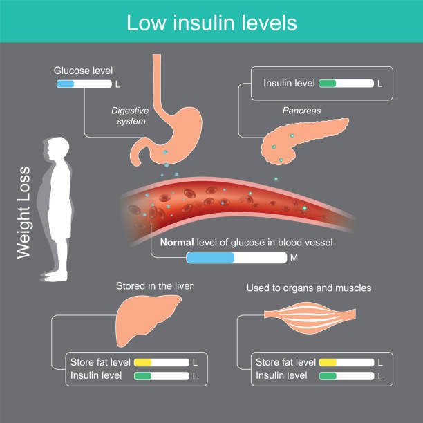Low insulin levels. Insulin in healthy body brings glucose into the blood stream for appropriate, glucose excess will be stored in the liver and used in organs or muscles. Reducing starch and sugar ingredient in foods Will result in pancreas secrete less insulin, the brain is not stimulating the appetite. carbohydrate biological molecule stock illustrations