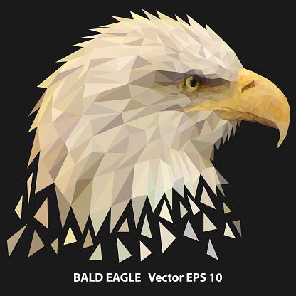 Low poly bald eagle head,  poligonal illustration