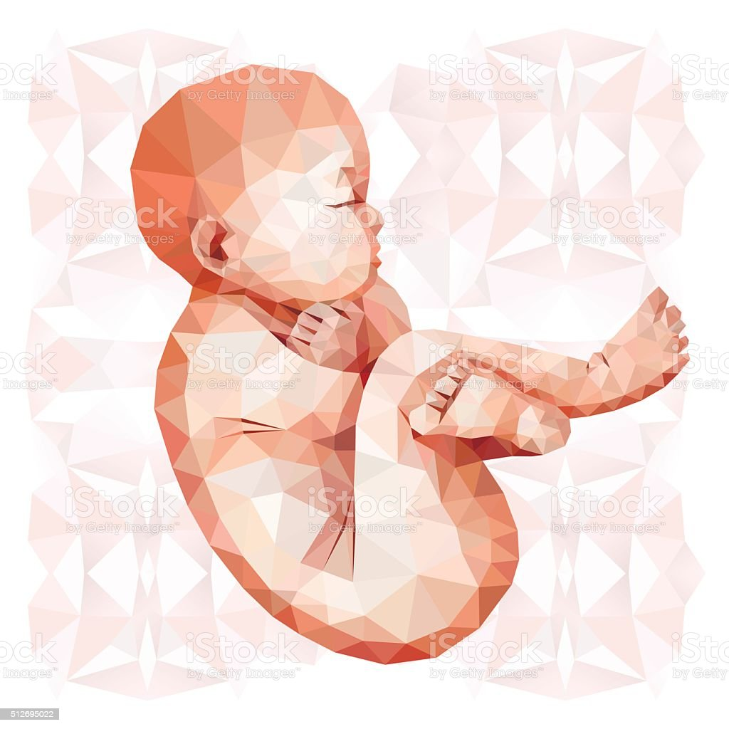 Low Poly Fetus Stock Vector Art & More Images of Anatomy 512695022 ...