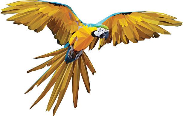ilustrações de stock, clip art, desenhos animados e ícones de poli baixo arara-voadora vector - arara