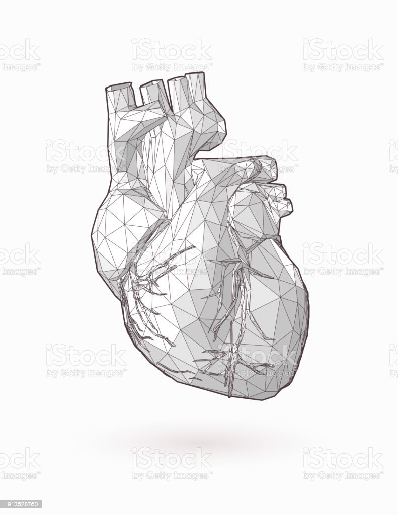 Low Poly Human Heart Graphic Illustration On White Bg Stock
