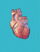 Low poly human heart stylized with wireframe edge on turquoise background