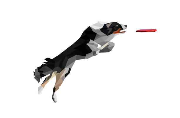 low-poly abbildung des realen schauenden hund springen und fangen disc. border-collie holen disc auf weißem hintergrund. - collie stock-grafiken, -clipart, -cartoons und -symbole