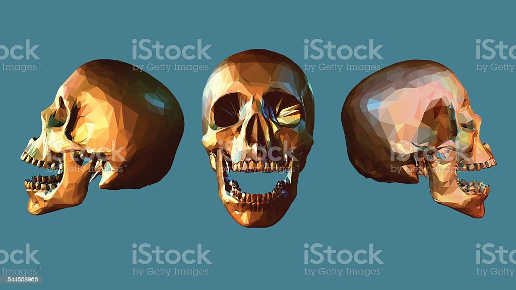 Low poly skull in various view vector art illustration