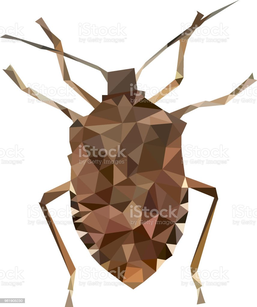 Low Poly Stink Bug Stock Vector Art & More Images of Abstract ...