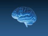Low poly x ray brain on dark blue BG