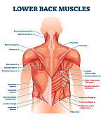 istock Lower back muscles labeled educational anatomical scheme vector illustration 1278520390