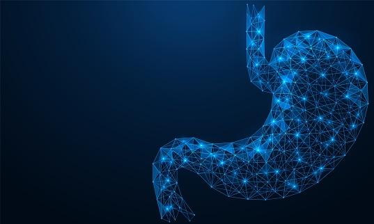 Low-poly stomach. Human digestive organ.