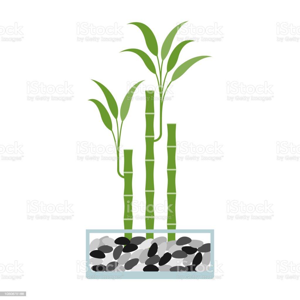 Bambus Im Glas Vektorillustration Stock Vektor Art Und Mehr Bilder