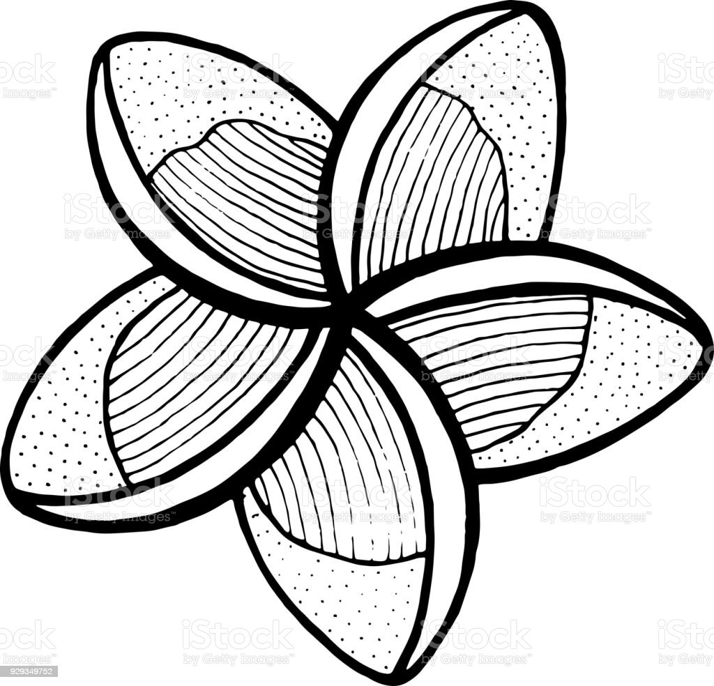Lumeria Coloring Page Line Art For Books Adults Tropical And Exotic Flower