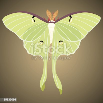 Vector illustration of a luna moth.  Illustration uses linear gradients on the moth, and a radial gradient on the background.  Moth and background are on separate layers and are easily separated.  CS .ai and AI8-compatible .eps formats are included, along with a high-res .jpg.
