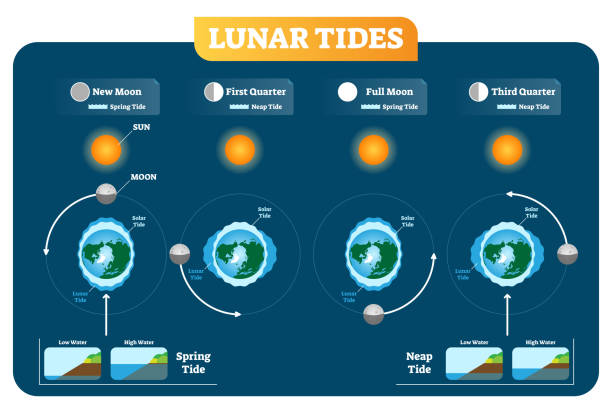 Lunar and Solar tides vector illustration diagram poster. Spring and Neap tide. Lunar and Solar tides vector illustration diagram poster infographic. Spring and Neap tide scheme. Gravitation force influence on the water levels and coastline. Geography and astronomy science. tide stock illustrations
