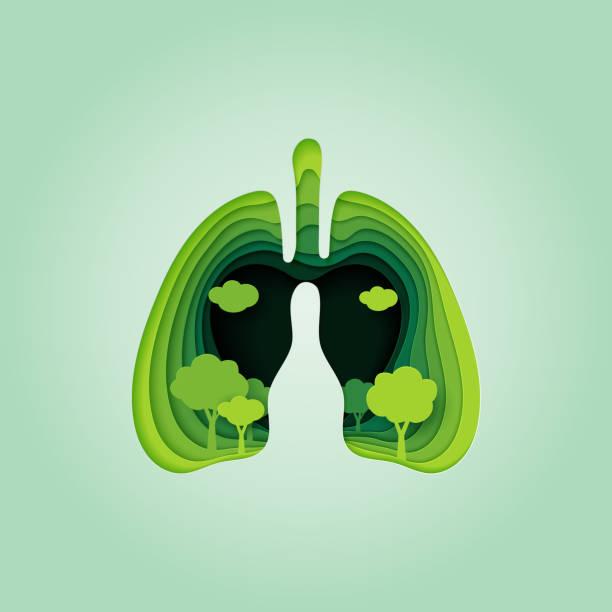 stockillustraties, clipart, cartoons en iconen met long en hart van de natuur concept paper art stijl. - longen