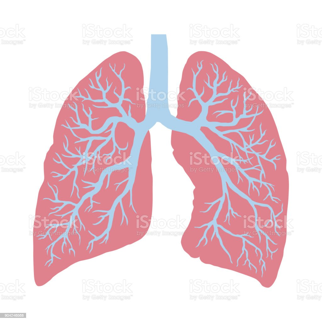Lung Cancer Diagram In Detail Illustration Stock Vector Art & More ...