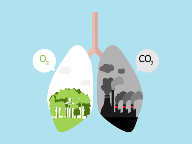 lung cancer with green tree forest for O2 and dark factory for CO2 vector art illustration