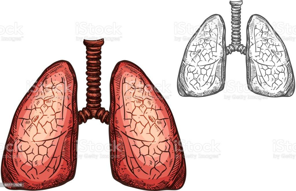 Lung Organ Der Menschlichen Anatomie Isoliert Skizze Stock Vektor ...
