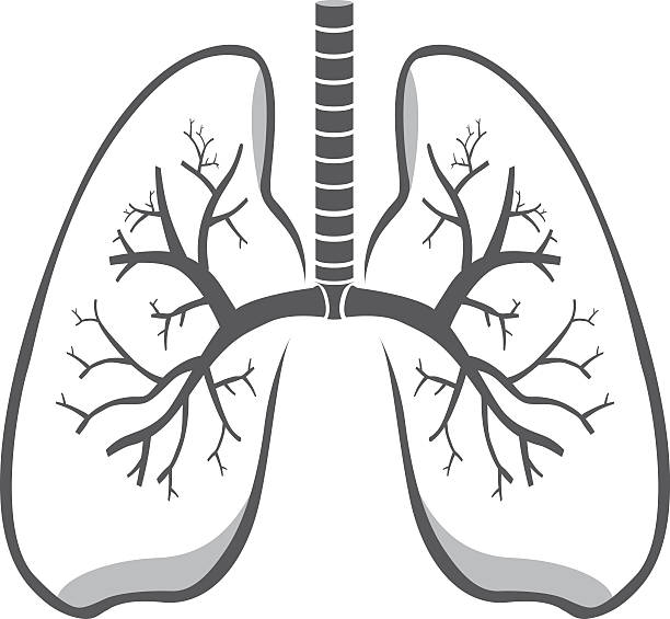 Royalty Free Lungs Clip Art, Vector Images & Illustrations ...