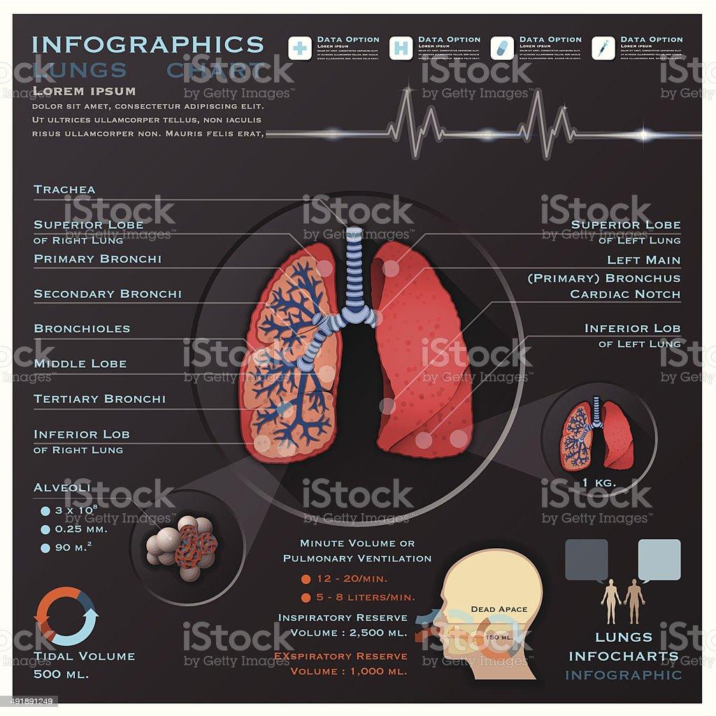 Ilustración de Pulmones Y Sistema Respiratorio Médicos Infografía ...