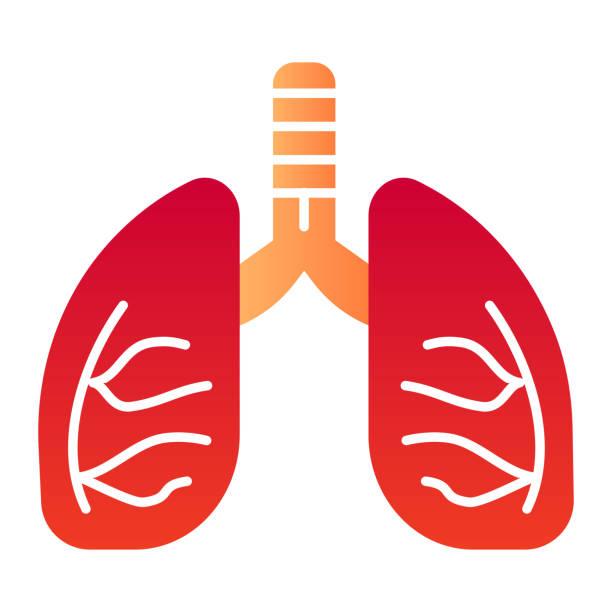 Lungs flat icon. Human anatomy vector illustration isolated on white. Organ gradient style design, designed for web and app. Eps 10. Lungs flat icon. Human anatomy vector illustration isolated on white. Organ gradient style design, designed for web and app. Eps 10 image stock illustrations