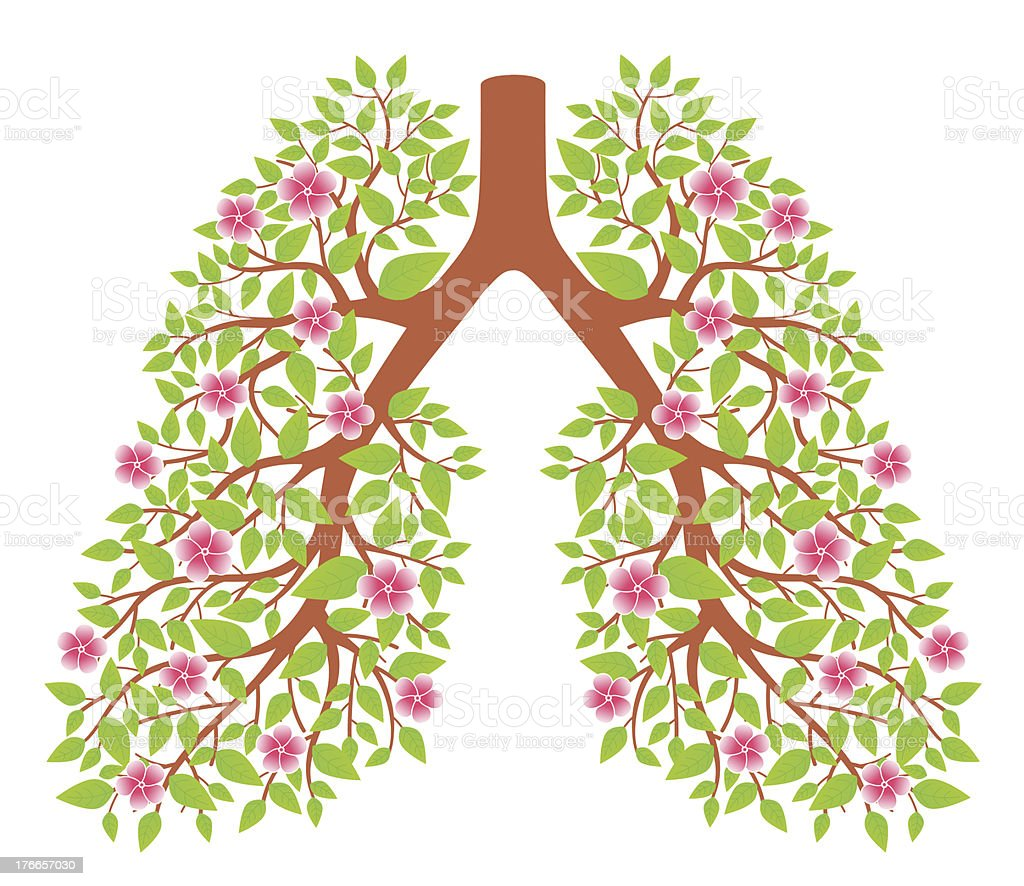 lungs healthy royalty-free stock vector art