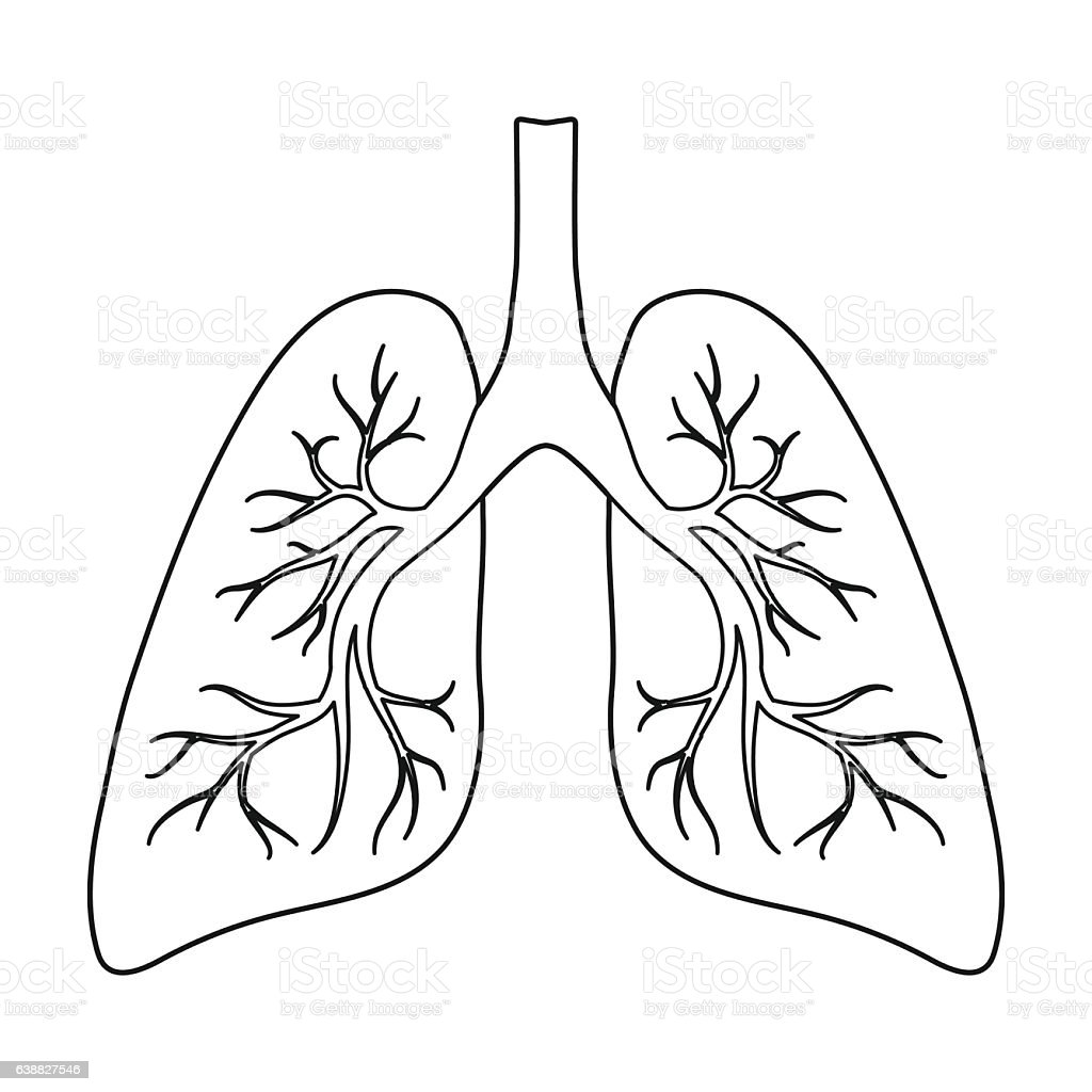 lungs sketch lungs icon in outline style isolated on white background 9625