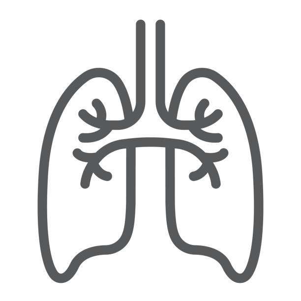 stockillustraties, clipart, cartoons en iconen met longen lijn pictogram, anatomie en biologie, pulmonologie teken, vector graphics, een lineair patroon op een witte achtergrond, eps 10. - longen