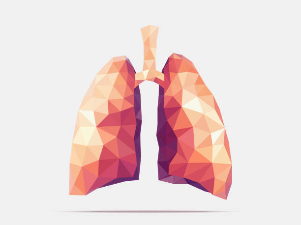 Lungs poly faceted Illustration of human lungs with faceted low-poly geometry effect human lung stock illustrations
