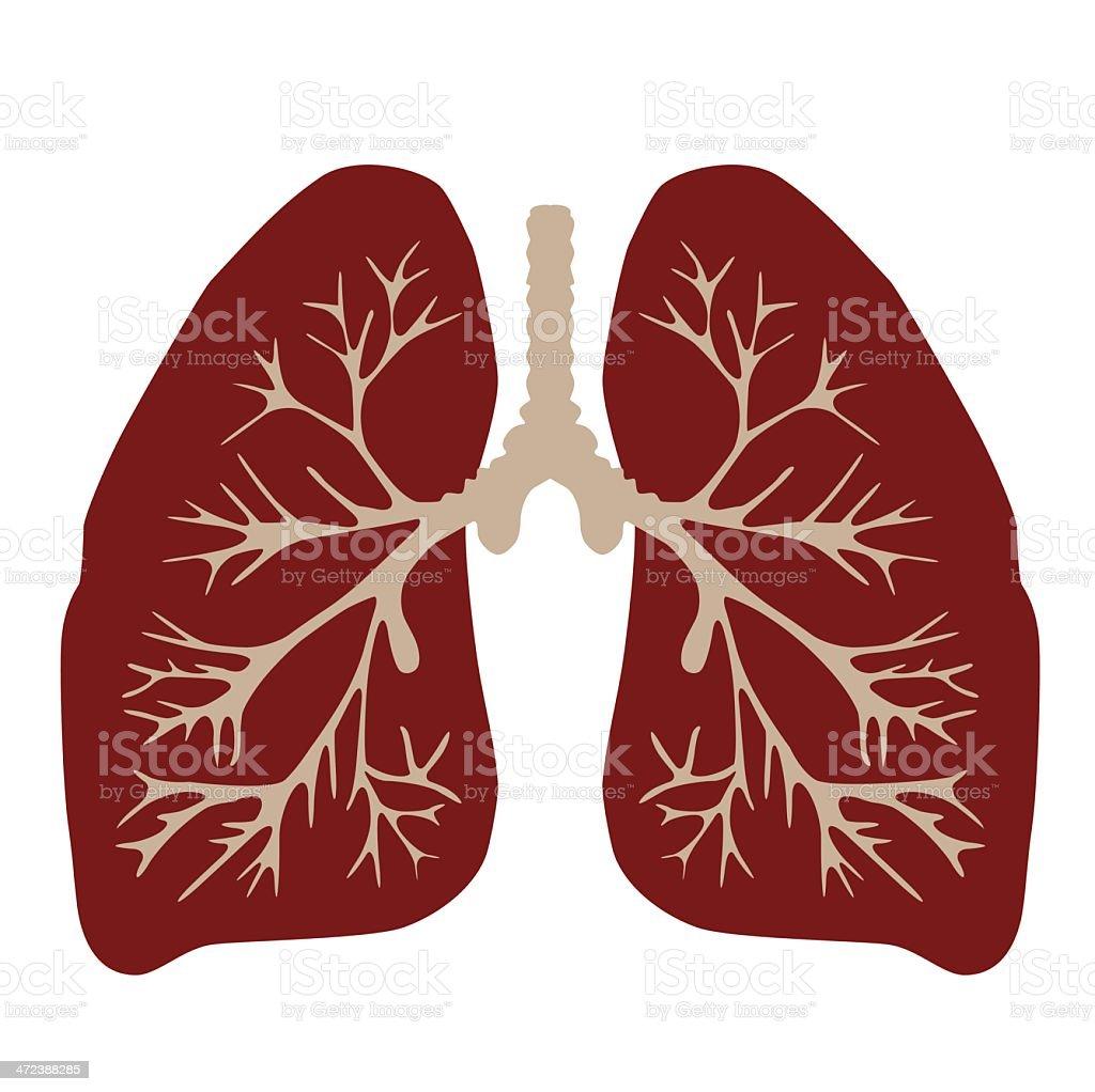 Der Lunge Stock Vektor Art und mehr Bilder von Anatomie 472388285 ...
