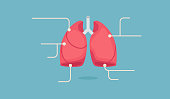 Lungs vector illustration