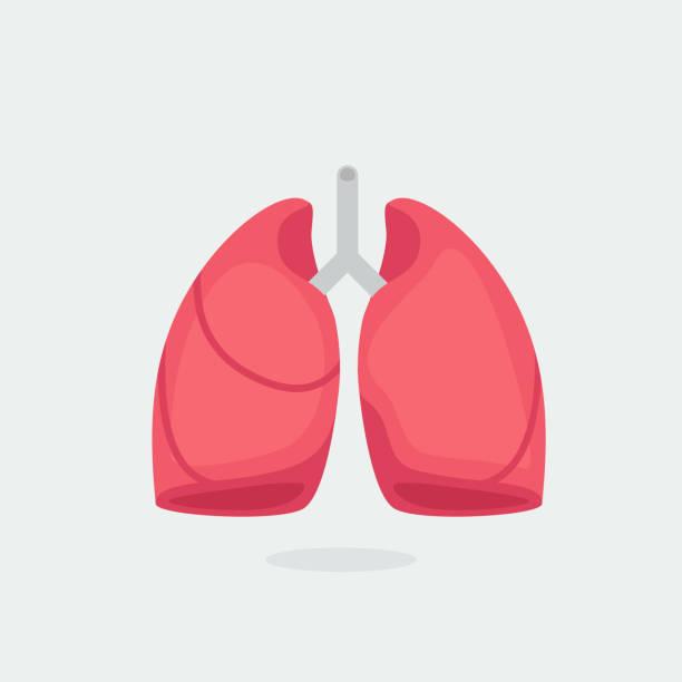 stockillustraties, clipart, cartoons en iconen met longen vector illustratie - longen