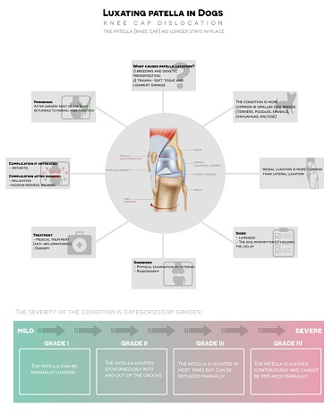 Luxating patella in dogs detailed info graphic poster