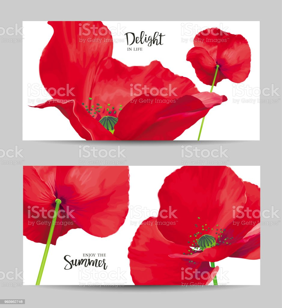 Luxurious Bright Red Vector Poppy Flowers Paintings Set On White