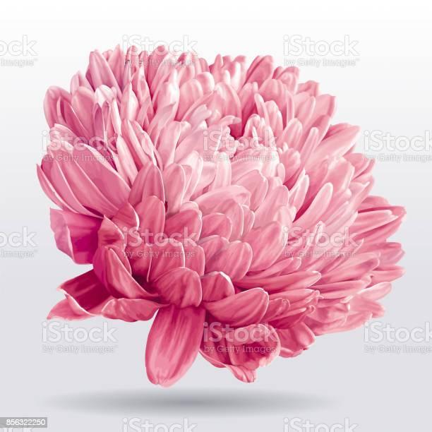 Luxurious pink aster flower vector id856322250?b=1&k=6&m=856322250&s=612x612&h=yi4efa7idmbte46 z1jixlak cv6xwsxpwprfvuzr0y=