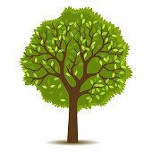 Illustrationen visar ett lövträd