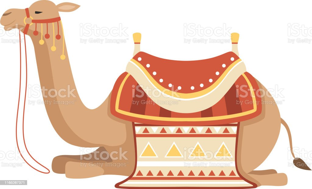 Lying Camel, Two Humped Desert Animal with Bridle and Saddle...