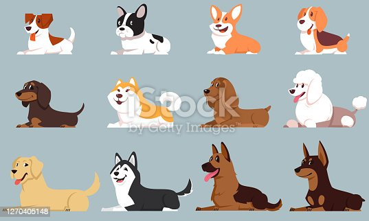 Lying dogs of different breeds.
