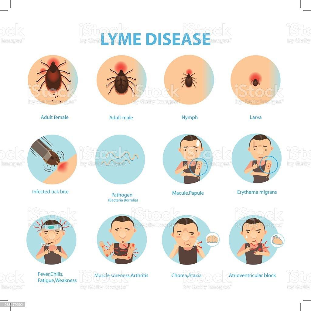 Lyme disease vector art illustration