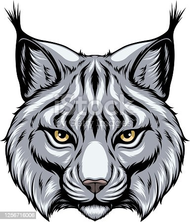 Vector image, the head of a lynx looks forward, on a white background.