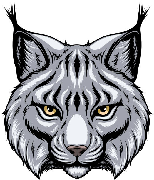Lynx head Vector image, the head of a lynx looks forward, on a white background. bobcat stock illustrations