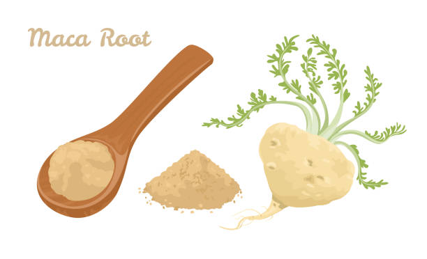 Maca root Powder in wooden spoon isolated on white background. Vector illustration of dietary supplement in cartoon flat style. Maca root Powder in wooden spoon isolated on white background. Vector illustration of dietary supplement in cartoon flat style. love potion stock illustrations
